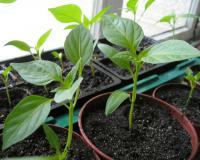 Агротехника растений