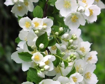 Фото и название домашних растений с