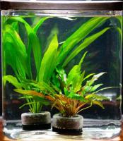 Tank PlantersTM