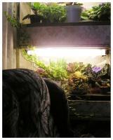 Стеллаж для растений в интерьере
