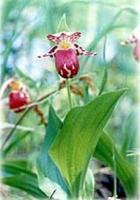 Редкие растения Урала