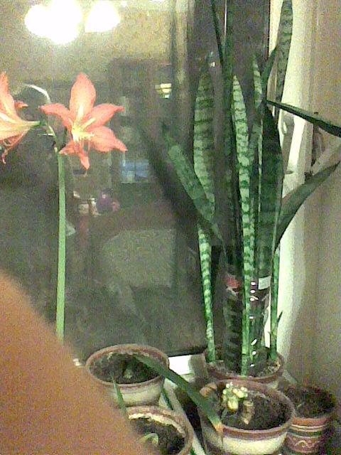 комнатные растения  и описание